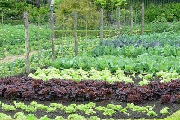 gradina-legume-mai